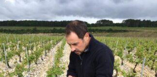 Domaine Christophe sebastien vigne chablis wine terroir importazione